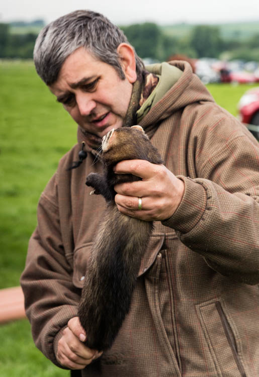 The judge examining a ferret at Duncombe Park Country fair